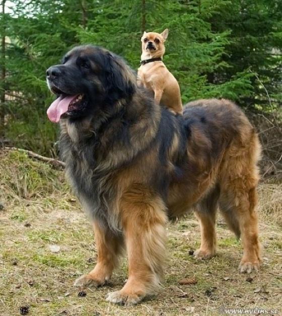 Dog-on-dog-560